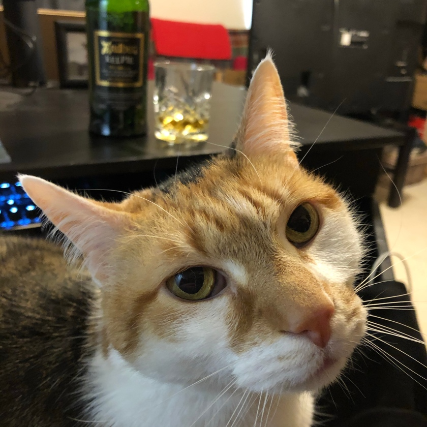 A calico cat, in closeup, stares at you. Over her shoulders, just out of focus, sits a bottle of Ardbeg Kelpie and a tumbler with a dram poured in it.